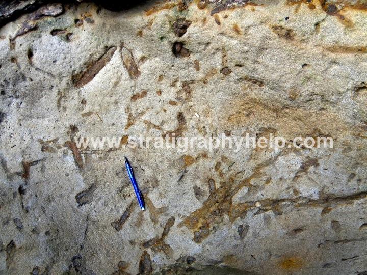 ophiomorpha-skolithos-ichnofacies-ichnofossils-ichnofabrics-bioturbation-index-ichnology-trace-fossils-sequence-stratigraphy-clastic-reservoirs-aapg-field-trips-nautilus-fie