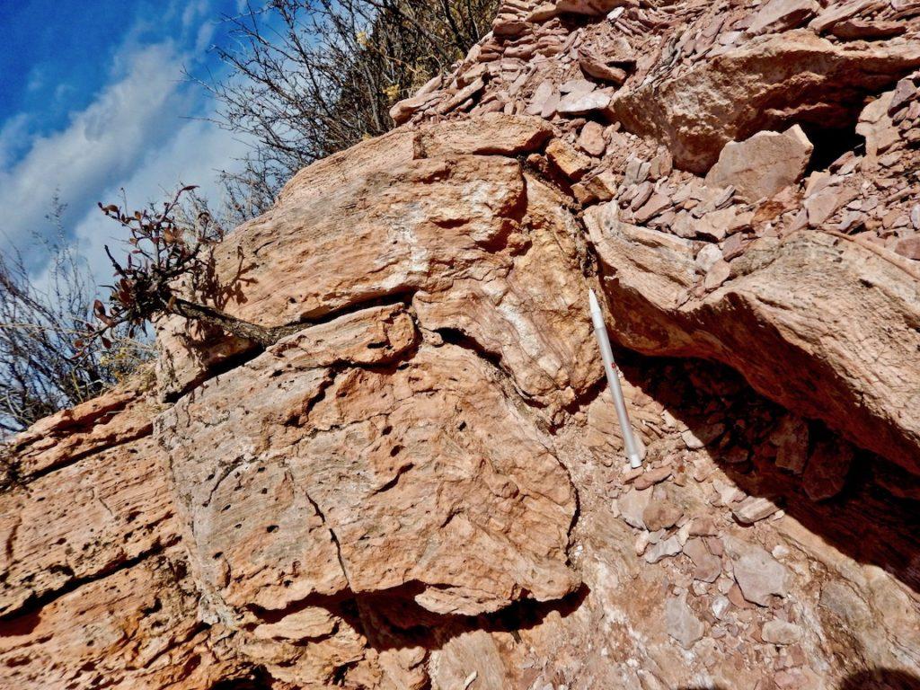tengiz-field-reservoirs-paradox-basin-carbonates-williston-basin-carbonates-algal-mounds-waulsortian-mounds-stromatolites-thrombolites-stevensite-shrubs-brazil-carbonates